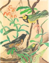 RicoArt-Birds_slider